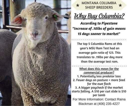 Montana Columbia Sheep Breeders Association - Montana